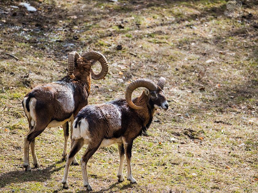 Hunting in Bulgaria and worldwide
